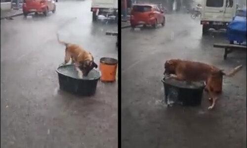 Chó ra vẻ tội nghiệp để ăn xin - 3