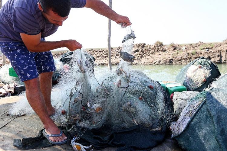 Cua xanh mắc đầy trong lưới đánh cá của ngư dân. Ảnh: AFP.