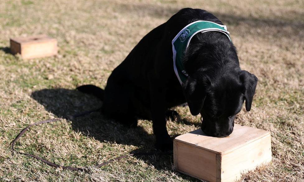 Một trong 4 con chó nghiệp vụ được huấn luyện tại thủ đô Santiago, Chile, hôm 28/7. Ảnh: Reuters.