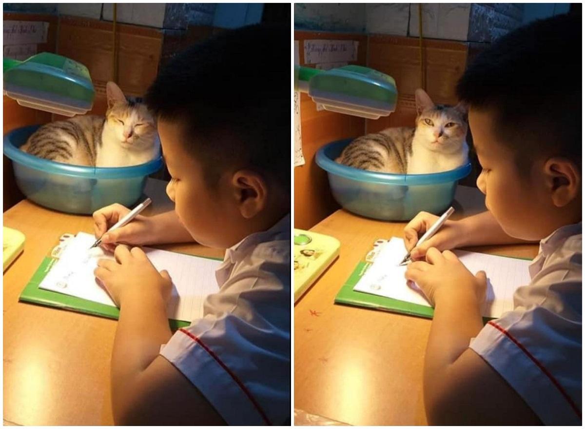 Ai cũng phải công nhận rằng Mướp rất có tâm khi tối nào cũng ngồi vào chiếc thau màu xanh đặt ở góc bàn học để giám sát sen học bài.