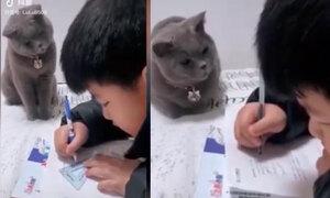 Mèo cưng canh chừng cậu chủ làm bài
