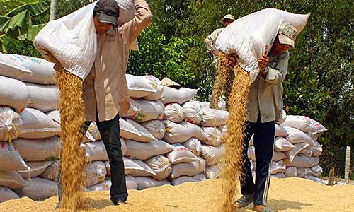 Dưới 10 công ruộng, không đủ sống với nghề trồng lúa - VnExpress