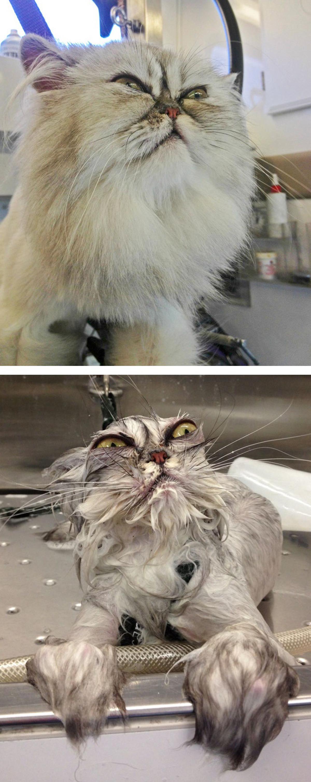 Thú cưng hóa phù thuỷ khi đi tắm