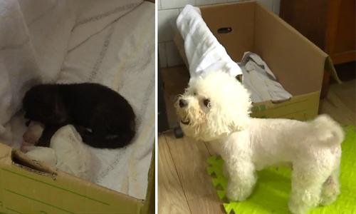 Chó mẹ nhận nuôi báo đen bị bỏ rơi