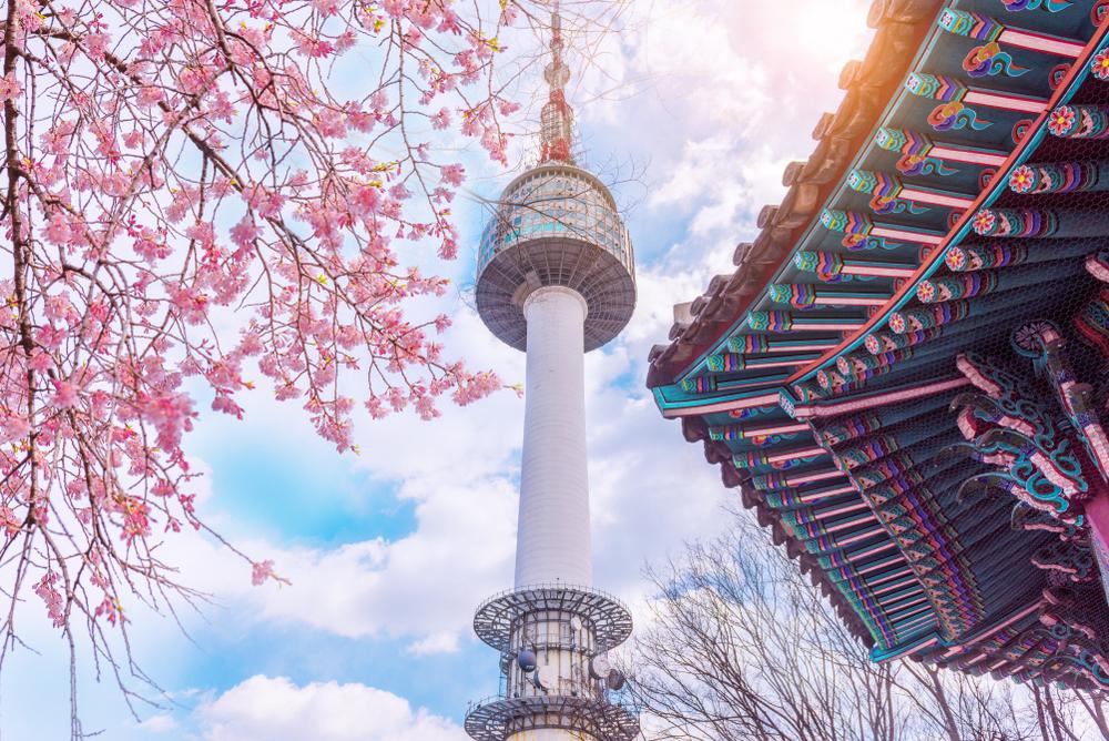 Tháp Namsan, một trong những biểu tượng của Hàn Quốc, trong mùa hoa anh đào. Ảnh: Shutterstock
