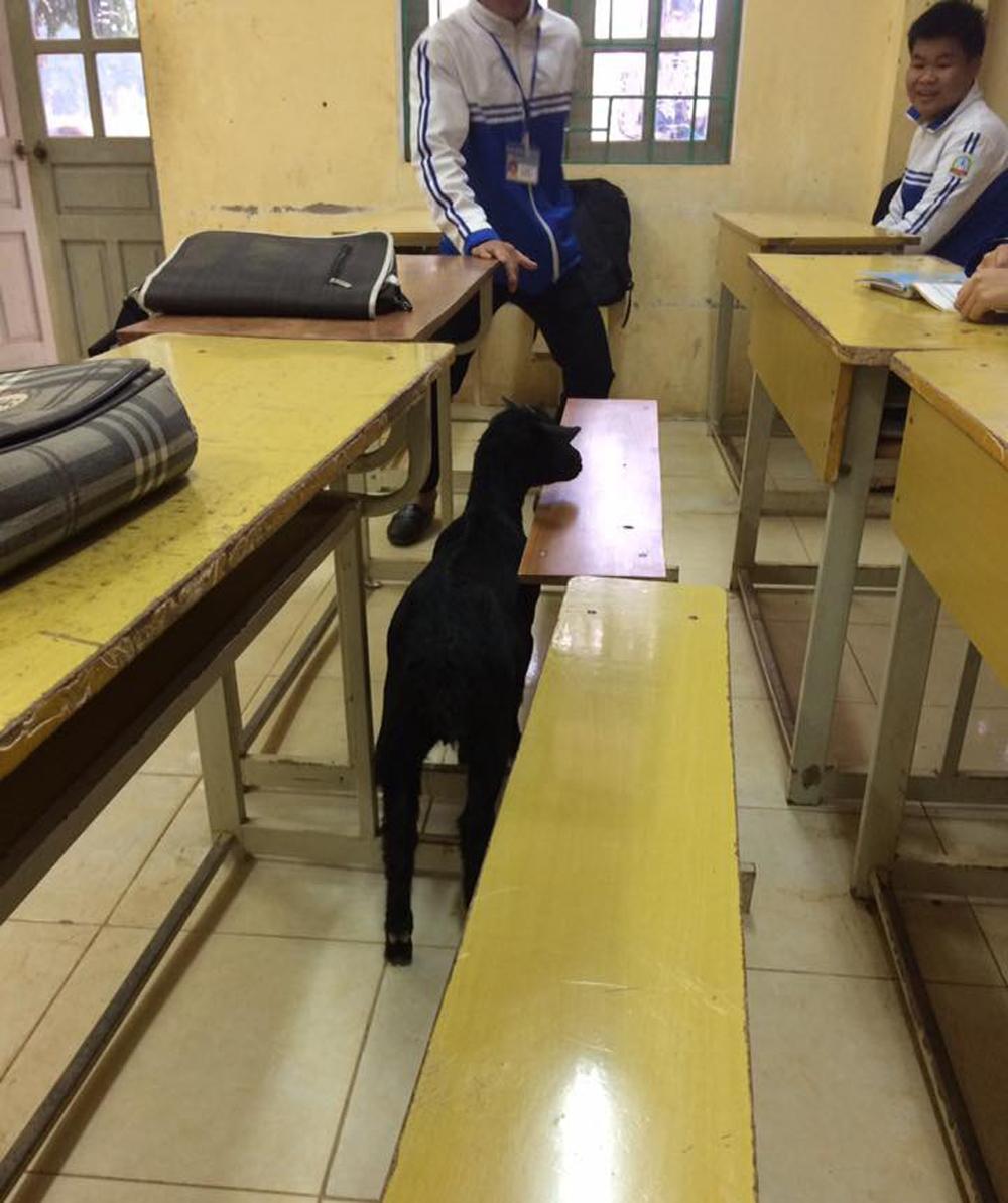 Ngạc nhiên chưa, thú cưng cũng được sĩ tử mang vào phòng thi.