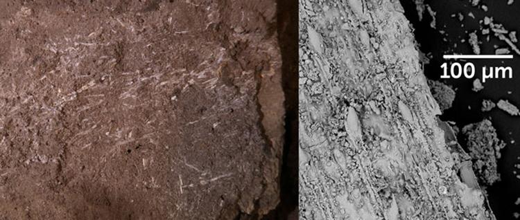 Lớp cỏ đã bị silic hóa được chụp và phóng đại bằng kính hiển vi điện tử quét. Ảnh: Science News.