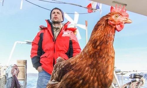Cặp vịt đực trả thù gà mái mỗi ngày - 3