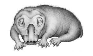 Hóa thạch thằn lằn xẻng ngủ đông 250 triệu năm tuổi