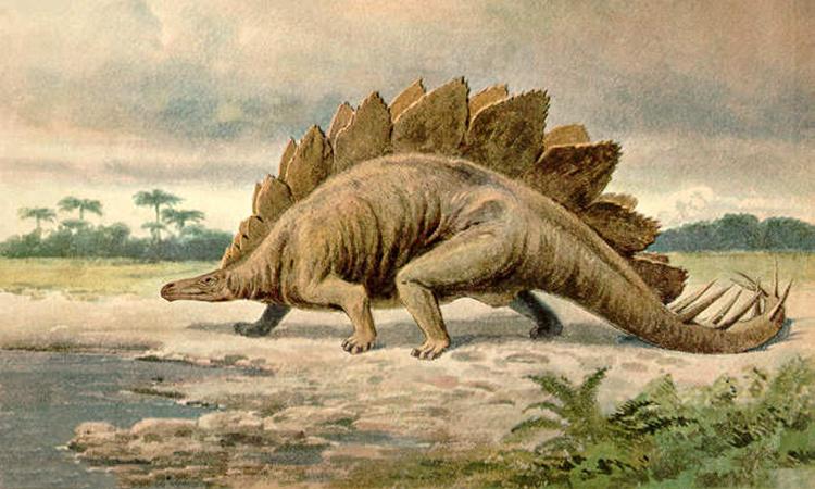 Hình vẽ mô phỏng một loài khủng long Stegosaurus. Ảnh: Heinrich Harder.