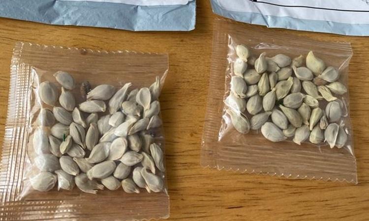 Những gói hạt giống lạ không đề tên người gửi mà người dân Mỹ nhận được tháng trước. Ảnh: WSJ.