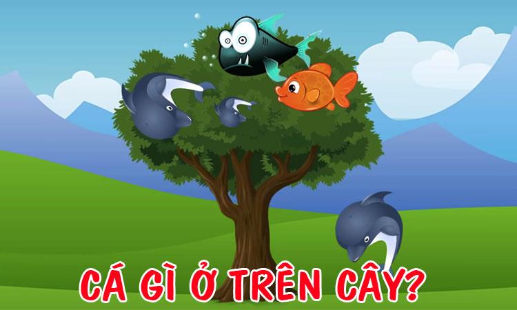 Cá gì ở trên cây?