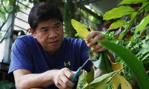 Cựu giám đốc trồng kiểng sau mất việc