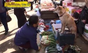 Chó cưng bán rau đắt như tôm tươi