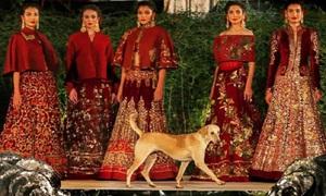 Chó chiếm sóng trong show thời trang