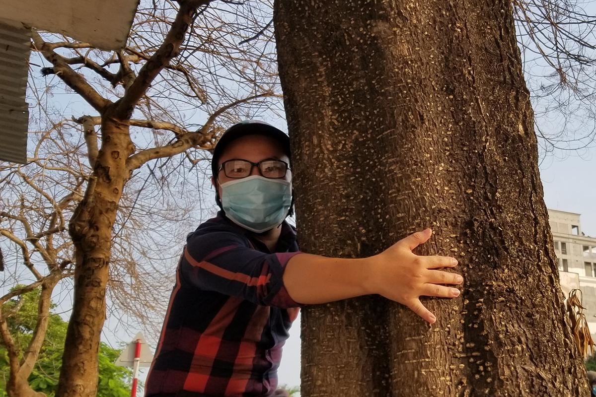 4 cây xanh trên đường Lê Hồng Phong, quận Ngô Quyền (Hải Phòng) bị đầu độc chết đứng ngay trước tòa nhà cao tầng đang xây dựng. Ảnh: Giang Chinh