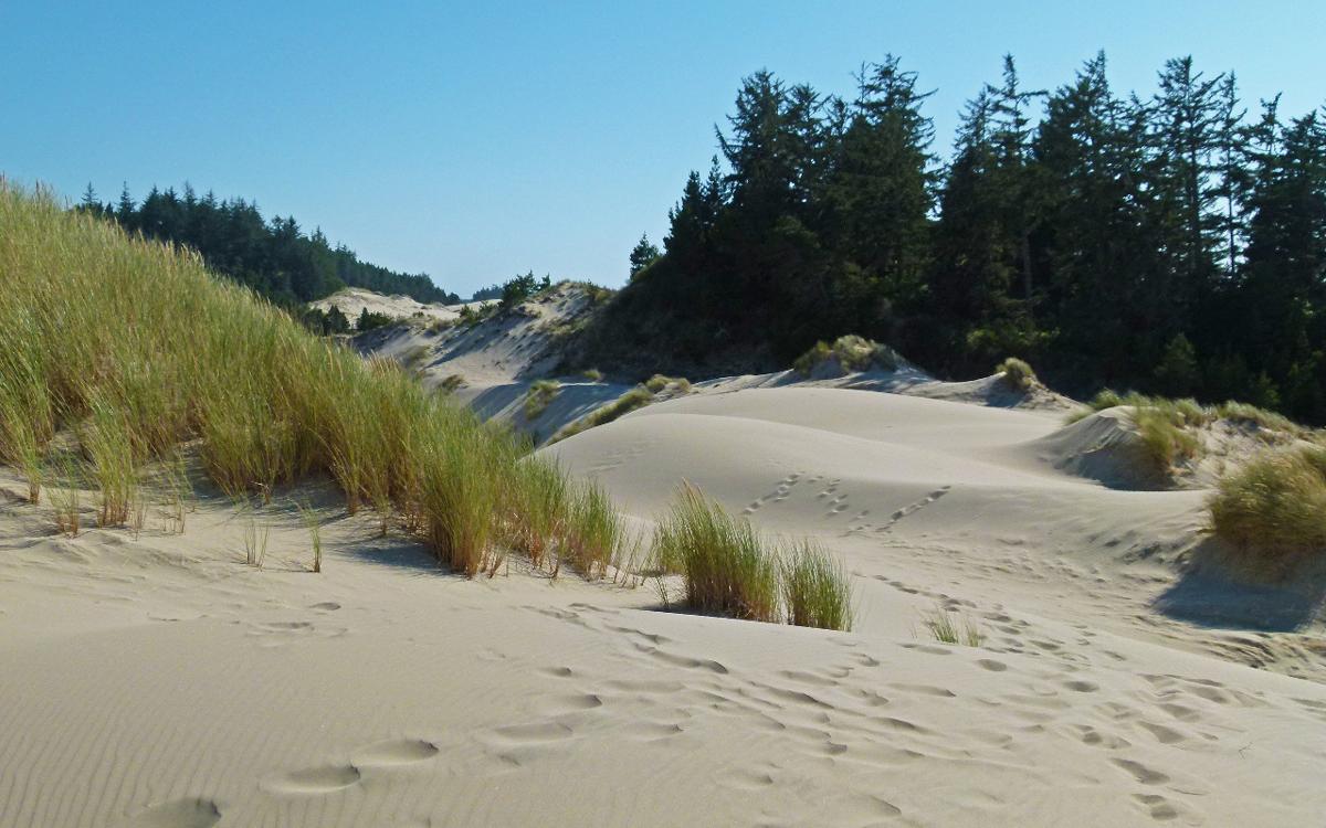 Đụn cát nơi thi thể được phát hiện. Ảnh: Public Domain.