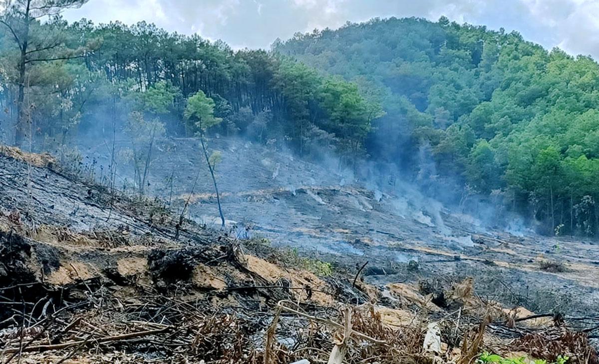 Khoảnh rừng ở xã Sơn Lộc sau vụ cháy. Ảnh: Đức Hùng