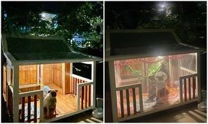 Chó cưng sở hữu căn hộ tiện nghi