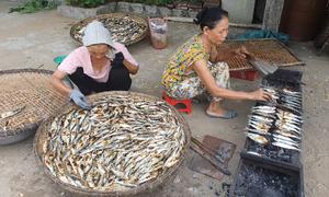 Ngư dân kiếm tiền triệu từ nướng cá trích