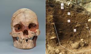 Phát hiện hộp sọ người 16.000 năm tuổi