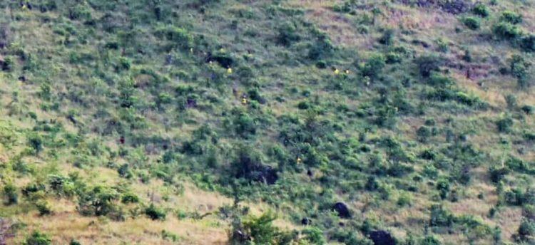 Tù nhân tỏa ra mọi hướng trong lúc lượng lực vũ trang Uganda truy bắt. Ảnh: PML Daily