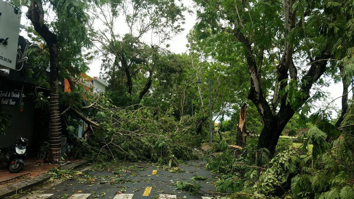 Bão giật đổ nhiều cây xanh ở TP Huế, sáng 18/9. Ảnh: Võ Thạnh.