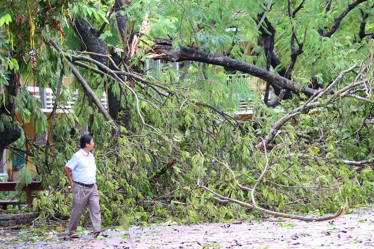 Cây đổ ở TP Huế, tỉnh Thừa Thiên Huế sáng 18/9. Ảnh: Võ Thạnh.