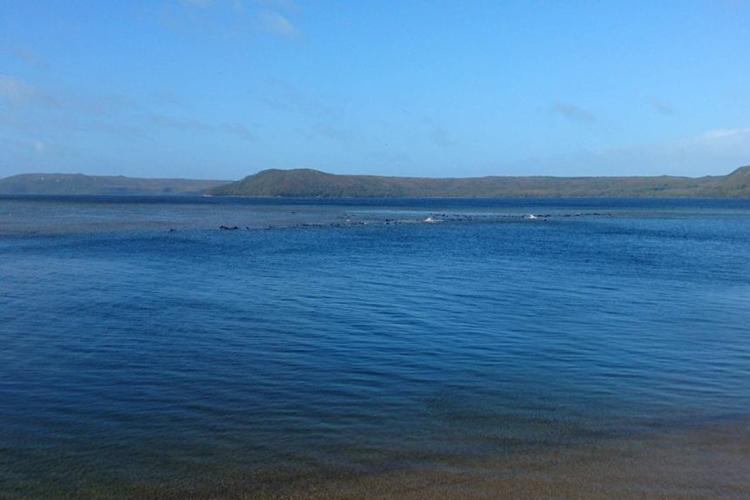 Đàn cá voi được phát hiện tại bờ biển phía tây đảo Tasmania. Ảnh: Cảnh sát Tasmania.