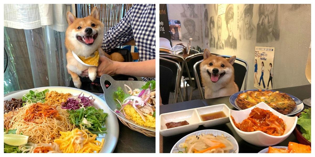 Chó Shiba nổi tiếng vì hay cười - 6