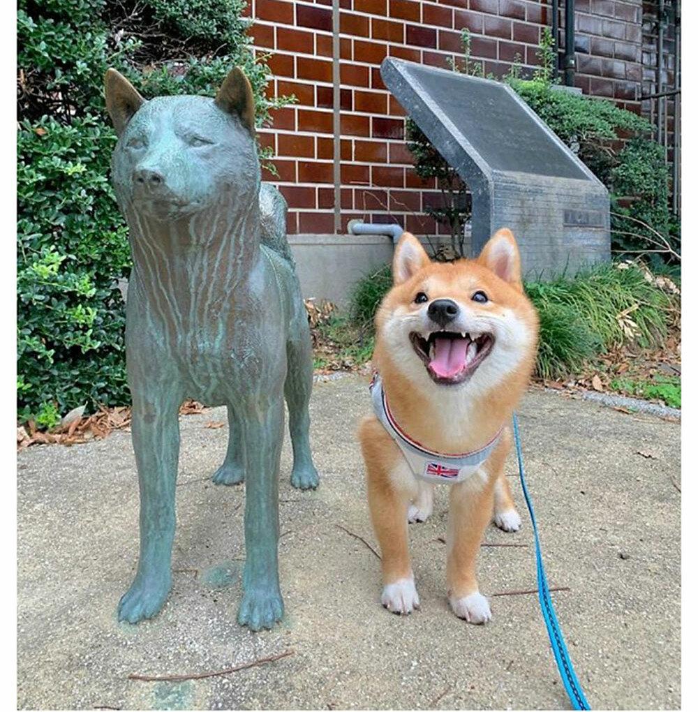 Chó Shiba nổi tiếng vì hay cười - 18
