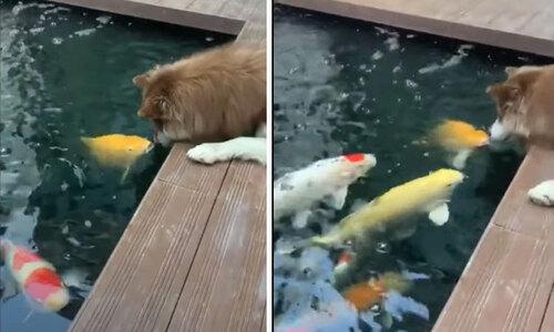 Cá heo cưỡng hôn huấn luyện viên - 3