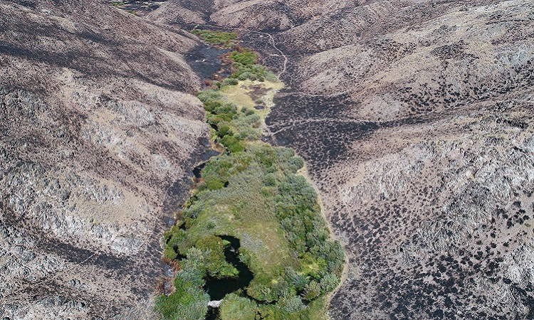 Đập hải ly ở bang Idaho. Ảnh: Joe Wheaton