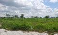 Lăn lộn trời Tây 20 năm không bằng ôm đất ở Việt Nam