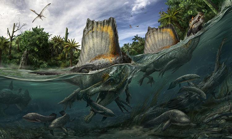 Đồ họa mô phỏng một con Spinosaurus aegyptiacus săn mồi dưới nước. Ảnh: Davide Bonadonna.