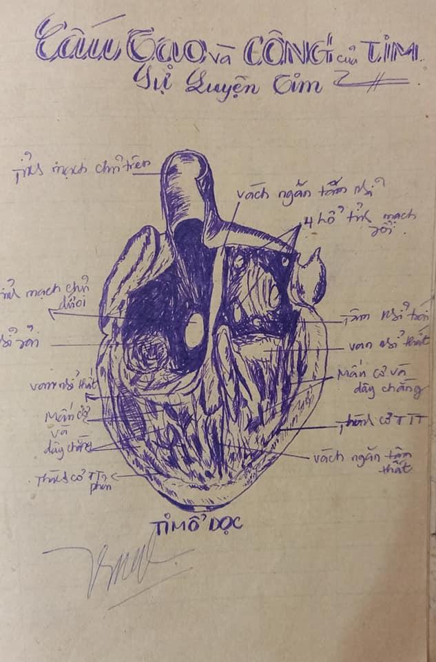 Mô phỏng hình ảnh tim mổ dọc chuẩn không cần chỉnh.