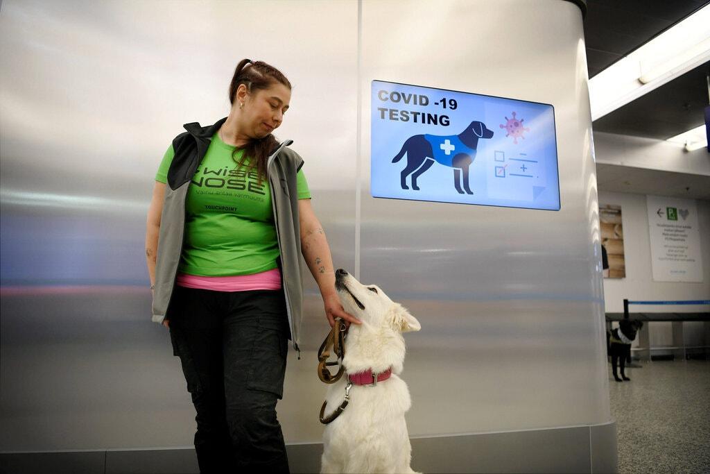 Một trong số những con chó được huấn luyện để phát hiện người nhiễm Covid-19 tại sân bay Helsinki. Ảnh: Reuters.