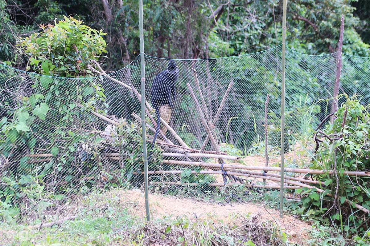 Một con voọc ra sát lưới quan sát, đuổi theo người từ phía bên trong. Ảnh: Hoàng Táo.