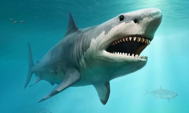Megalodon là một trong những loài cá mập lớn nhất từng sống trên Trái Đất. Ảnh: Warpaint Cobra.