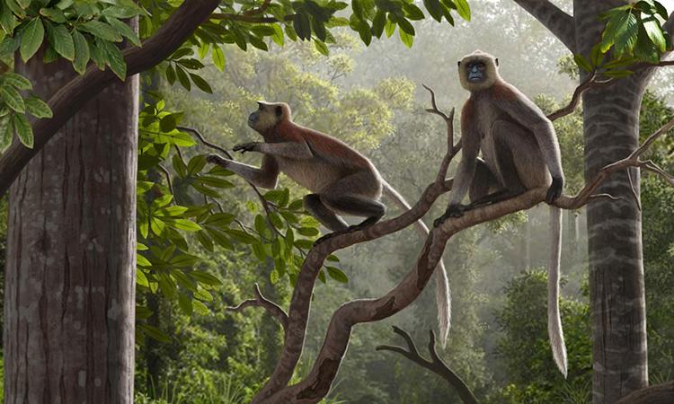 Mô phỏng loài khỉ Mesopithecus pentelicus sống cách đây 6,4 triệu năm. Ảnh: Mauricio Antón.