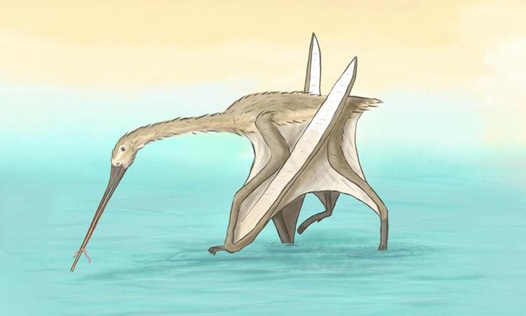 Mô phỏng L. begaaensis săn mồi dưới vùng nước nông. Ảnh: Megan Jacobs/Đại học Portsmouth.