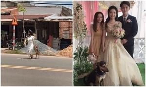 Cô dâu sang hàng xóm lôi chó cưng về chụp ảnh kỷ niệm