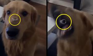 Nhận trái đắng vì nhờ chó giữ nhẫn để sống ảo