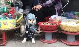 Mèo hóa thành siêu anh hùng ra chợ bán rau