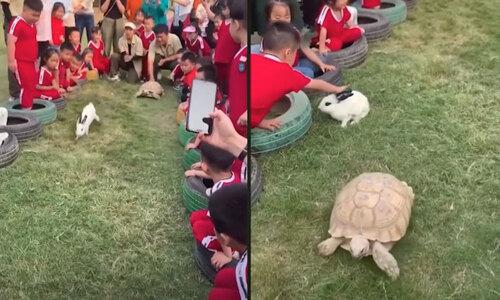 Rùa cưỡi cá sấu dạo trong hồ - 3