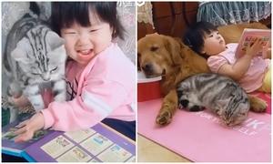 Chó và mèo mệt lả vì chơi cùng em bé