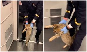 Mèo bị hộ tống khỏi tàu vì đi lậu vé