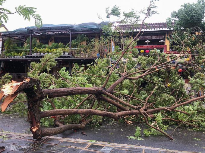Cây đổ trên đường Nguyễn Phúc Chu, TP Quảng Nam. Ảnh: Ngọc Thành.