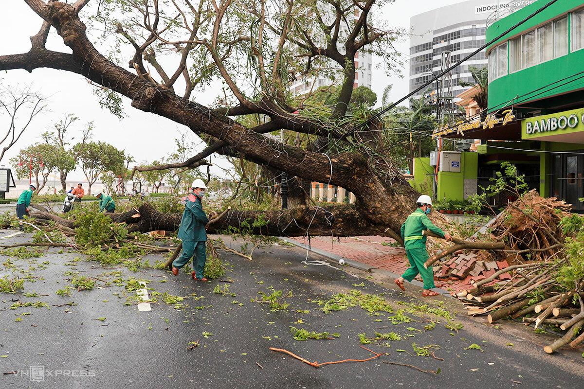 Rất nhiều cây xanh ở miền Trung ngã đổ trong bão. Ảnh: Nguyễn Đông.