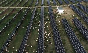 Dự án điện mặt trời biến sa mạc thành đất chăn cừu